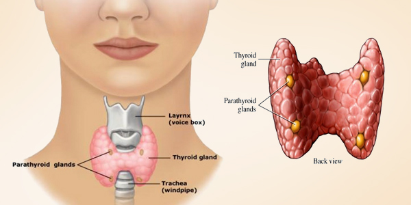 WHAT AFFECTS MY THYROID?